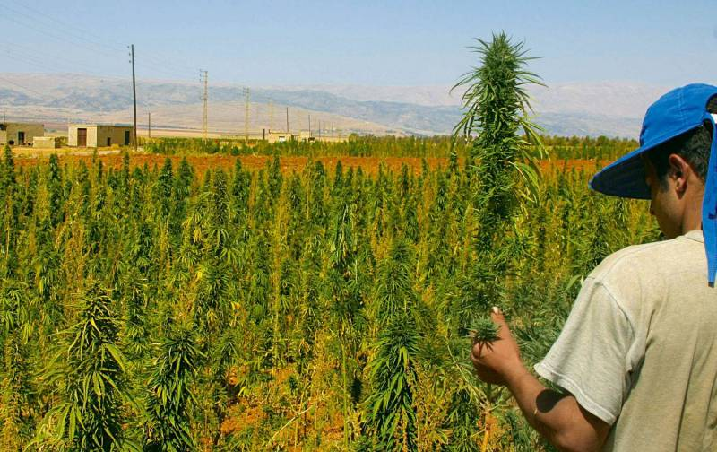 Medical marijuana for Lebanon? More complicated than it sounds…