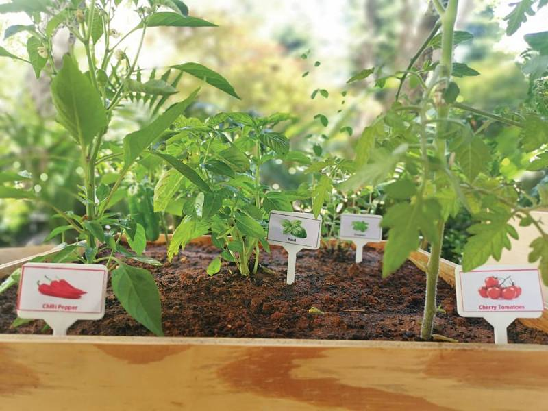 La société Arbusta a développé un concept de box pour jardiner