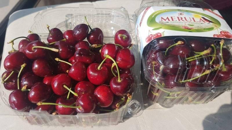 «Merula», une nouvelle marque de cerises et raisins libanais