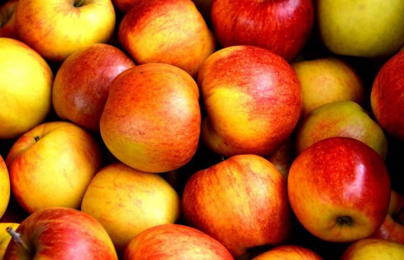 Le Pnud finance un nouveau centre de tri et stockage de fruits et légumes à Jezzine