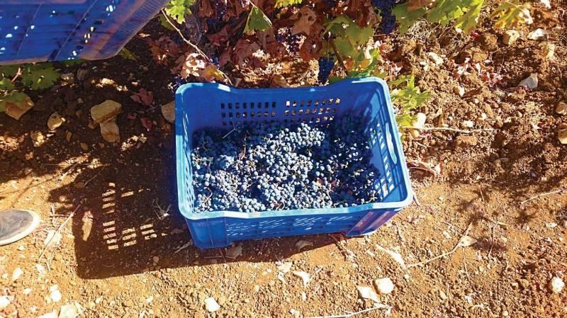 Les gels hydroalcooliques pourraient éventuellement être fabriqués avec de l'alcool vinique à condition de le purifier.