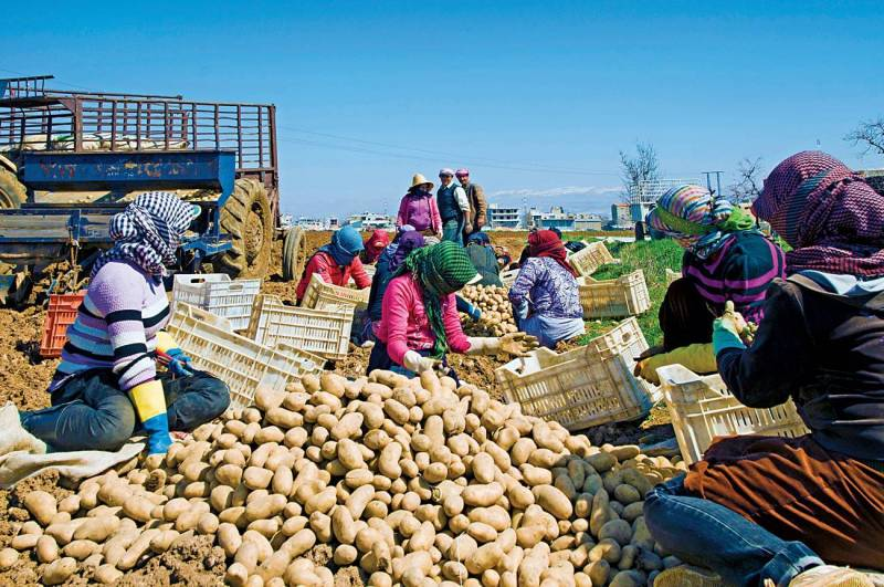 Lebanon's Agriculture Collapses
