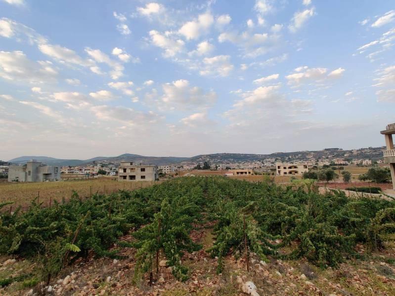 Un nouveau vignoble avec vue sur la ligne bleue